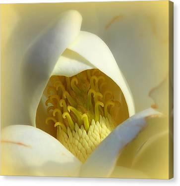 Magnolia Cloud Canvas Print by Karen Wiles