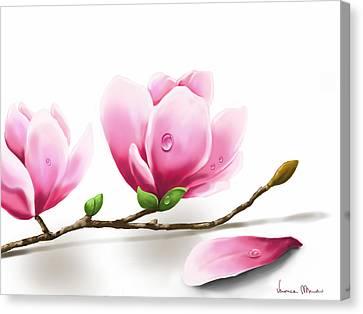 Magnolia Canvas Print by Veronica Minozzi