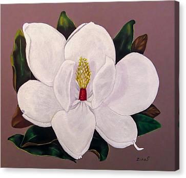 Magnolia Canvas Print by Zina Stromberg