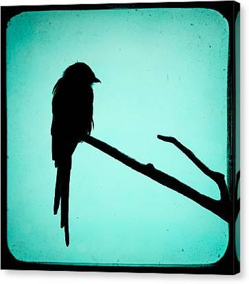 Magpie Shrike Silhouette Canvas Print by Gary Heller