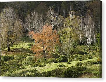 Maine Hillside Landscape In Fall Canvas Print by Keith Webber Jr