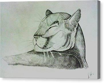 Majestic Cougar Canvas Print by Deborah  Heins