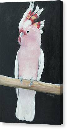 Major Mitchell Cockatoo Canvas Print by Jan Matson