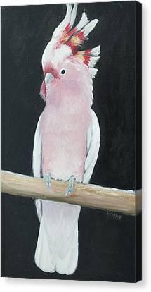Major Mitchell Cockatoo Canvas Print by Jan Matson