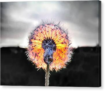 Make A Wish  Canvas Print by Marianna Mills