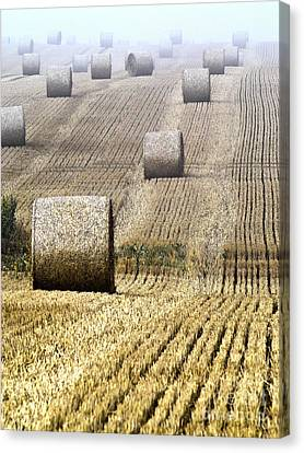 Make Hay While The Sun Shines  Canvas Print by Heiko Koehrer-Wagner