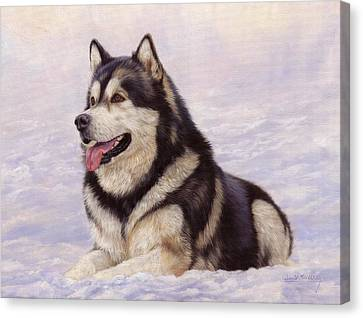 Malamute Canvas Print by David Stribbling