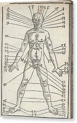 Male Anatomy Canvas Print by British Library