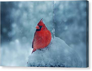 Male Cardinal In The Snow Canvas Print by Sandy Keeton