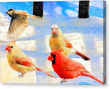Male Cardinal With Two Females And Junco Canvas Print by Janette Boyd