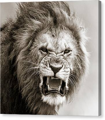 Male Lion I Masai Mara Kenya Canvas Print by Regina Mueller
