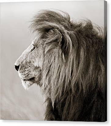 Male Lion IIi Masai Mara Kenya Canvas Print by Regina Mueller