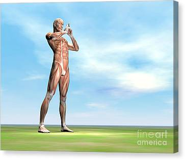 Male Musculature Standing On The Green Canvas Print by Elena Duvernay
