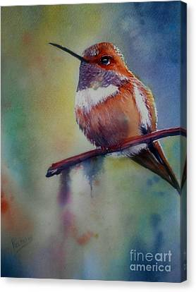 Male Rufous Humminbird Canvas Print by Patricia Pushaw