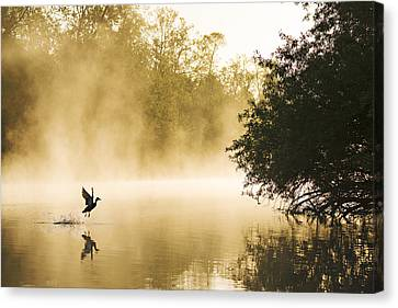 Mallard Taking Flight Noord-brabant Canvas Print by Wim Werrelman