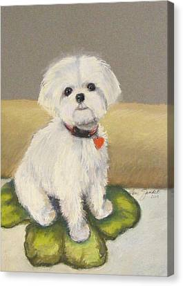 Maltese Jeeter Canvas Print by Lenore Gaudet