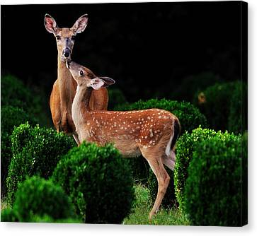 Mama And Her Fawn Canvas Print by Angel Cher