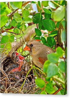 Mama Bird Canvas Print by Frozen in Time Fine Art Photography