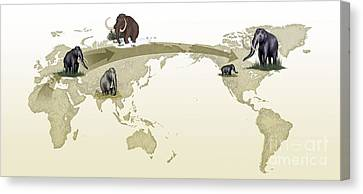 Mammoth Evolutionary Migration Canvas Print by Spl