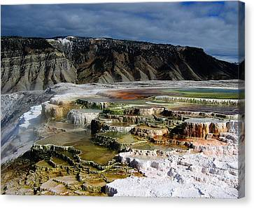 Mammoth Hot Springs Canvas Print by Robert Woodward