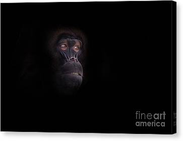 Man In The Mask Canvas Print by Ashley Vincent