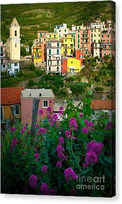 Manarola Flowers And Houses Canvas Print by Inge Johnsson