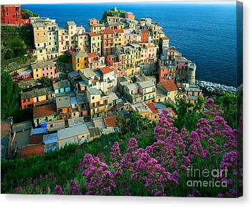 Manarola From Above Canvas Print by Inge Johnsson