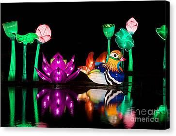 Mandarin Duck Chinese Lantern Canvas Print by Tim Gainey