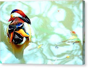 Mandarin Duck Resting II Canvas Print by C Lythgo