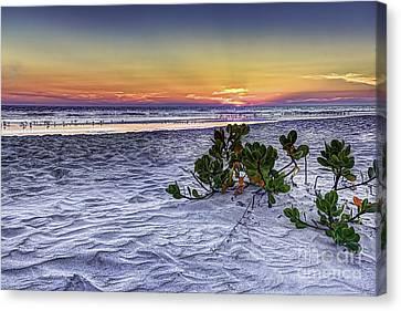 Mangrove On The Beach Canvas Print by Marvin Spates