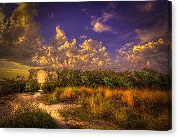 Mangrove Path Canvas Print by Marvin Spates