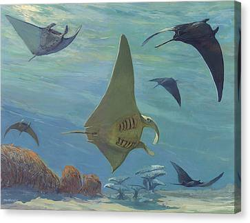 Manta Ray Canvas Print by ACE Coinage painting by Michael Rothman