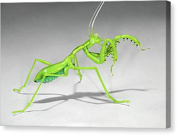 Mantis Canvas Print by Tomasz Litwin