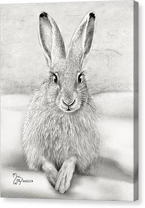 March Hare Canvas Print by Miki Krenelka