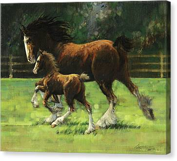 Clydesdale Mare And Colt Canvas Print by Don  Langeneckert