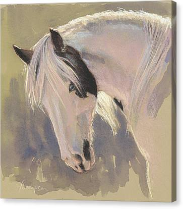 Mare With A Halo Canvas Print by Tracie Thompson