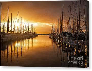 Marina Golden Sunset Canvas Print by Mike Reid