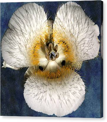 Mariposa Lily Two Canvas Print by Belinda Greb