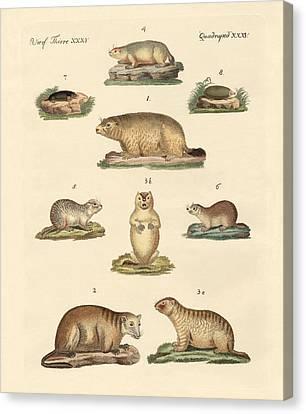 Marmots And Moles Canvas Print by Splendid Art Prints