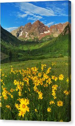 Maroon Summer Canvas Print by Darren  White