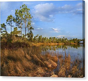 Marsh And Trees Saint George Isl Florida Canvas Print by Tim Fitzharris