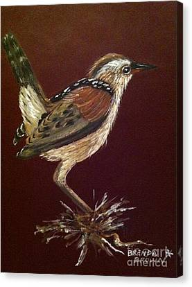 Marsh Wren Canvas Print by Brenda Brown