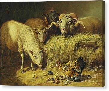 Maternal Solicitude Canvas Print by Pg Reproductions