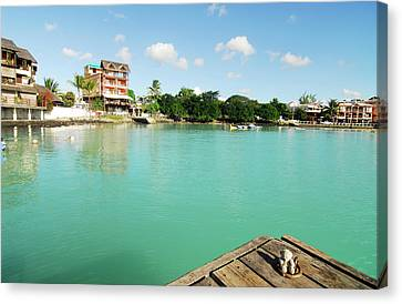 Mauritius, Grand Baie, A Small Teddy Canvas Print by Anthony Asael