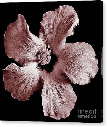 Mauve Hibiscus Canvas Print by Marsha Heiken