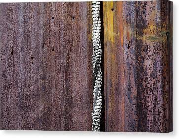Maximum Decay  Canvas Print by Fran Riley
