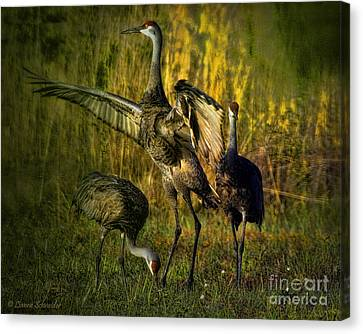 May I Have This Dance Canvas Print by Lianne Schneider