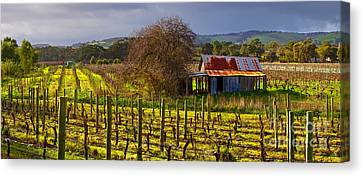 Mclaren Flat Vineyard Canvas Print by Bill  Robinson