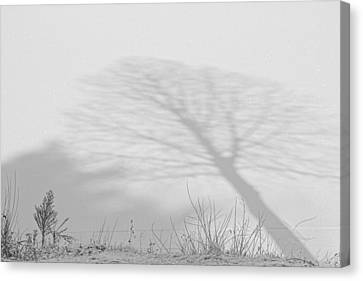 Me And My Shadow Black And White Canvas Print by James BO  Insogna