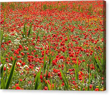 Meadow Covered With Red Poppies Canvas Print by Jose Elias - Sofia Pereira
